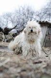 Photos shaggy dog Stock Photo