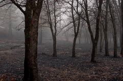 Scorched Earth 3 royalty free stock images