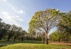 Photos from the tree at Si Thep Historical Park, Phetchabun Stock Photos