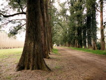 Photos of trees. Pictures of pines and trees  in autumn Royalty Free Stock Photography