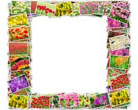 The photos of tulips arranged in frame shape Royalty Free Stock Photos