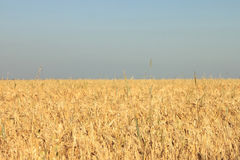 Photos wheat field and sky in the shape and color of Ukrainian flag Stock Photography