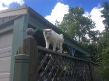 Photo cat Royalty Free Stock Image