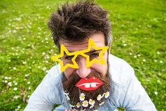 Photosession concept. Hipster with beard on cheerful face, posing with star shaped glasses and lips. Guy looks nicely. With daisy flowers in beard. Man with Royalty Free Stock Image