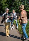 Photoshoot με τα κατοικίδια ζώα Στοκ Εικόνες