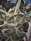Photoshoot de la planta Foto de archivo libre de regalías