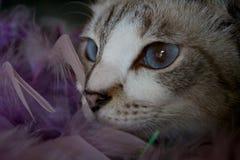 Photoshoot del gato Fotografía de archivo
