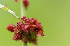Photoshoot macro de la flor fotos de archivo