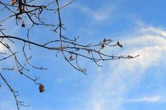 Photoshoots macro da árvore da flor Fotografia de Stock