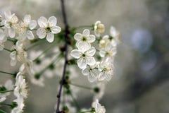 Photoshoots macro da flor Imagens de Stock