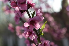 Photoshoots macro da flor Imagem de Stock
