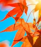photosynthèse Photographie stock libre de droits