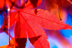 photosynthèse Photos libres de droits