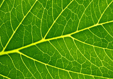 Photosynthesis Royalty Free Stock Photos