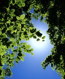 Photosynthesis Royalty Free Stock Image
