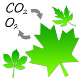 Photosynthesis. Plants and trees forming oxygen and absorbing carbon dioxide through photosynthesis Stock Photo