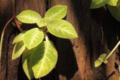 Photosynthesis Royalty Free Stock Photography