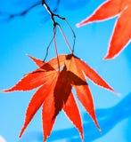 photosynthesis Royaltyfri Bild