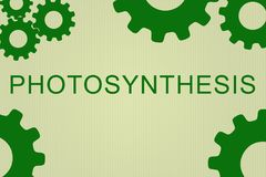 Photosynthesis - biological concept Royalty Free Stock Image