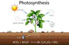 Photosynthesis explanation science diagram. Illustration Royalty Free Stock Photography