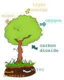 Photosynthesis plan text royalty free stock image