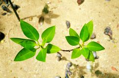 Green Plant Leaves in bright sunlight Stock Photos