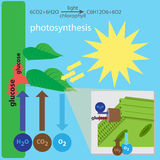 Photosynthesis process Royalty Free Stock Photos