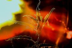 photosynthesis royaltyfria foton