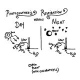 Photosynthesis and respiration. Photosynthesis versus respiration as quick handwritten sketch Royalty Free Stock Image