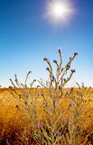 Photosynthesis. Wild plant looking fort sunlight  to achieve photosynthesis Royalty Free Stock Image