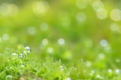 Photosynthetic Stock Photo