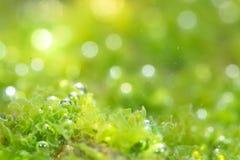 Photosynthetic Royalty Free Stock Photography