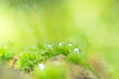 Photosynthetic Royalty Free Stock Images
