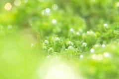 Photosynthetic Stock Photos