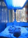 Phototherapy voor pasgeboren Stock Fotografie