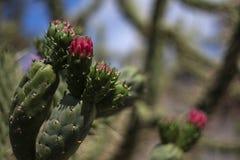 phpto фокуса цветка кактуса близкое выбранное вверх Стоковая Фотография