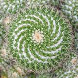phpto фокуса цветка кактуса близкое выбранное вверх Стоковая Фотография RF