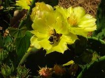 phpto фокуса цветка кактуса близкое выбранное вверх Стоковое Изображение
