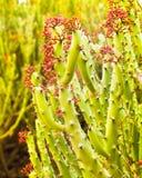 phpto фокуса цветка кактуса близкое выбранное вверх Стоковые Фото