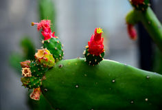 phpto фокуса цветка кактуса близкое выбранное вверх Стоковые Изображения RF