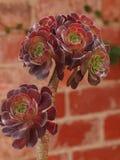 phpto фокуса цветка кактуса близкое выбранное вверх Стоковое Изображение RF