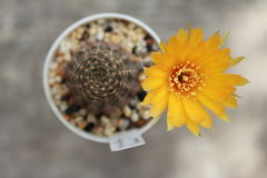phpto фокуса цветка кактуса близкое выбранное вверх Стоковые Изображения
