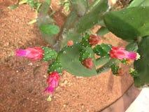 phpto för fokus för kaktuscloseblomma som väljs upp Arkivbilder