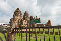 Phra Prang Sam Yot. Monkey and, ancient remains Lopburi thailand Stock Images