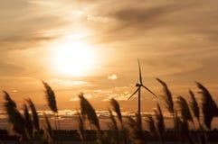 Windmill turbine. Phragmites communis and windmill on sunset royalty free stock images