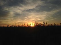 Phragmites Grass during Sunset on Nickerson Beach. Stock Photography