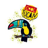 The phrase cool  toucan bird on a branch in the jungle. Royalty Free Stock Images