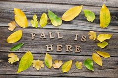 Phrase Fall is here in wooden letters. Frame of yellow leaves, wooden background Stock Images