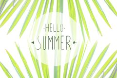 Phrase Hello summer on the background of green foliage and sunlight. Selective focus vector illustration