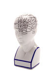 Phrenology Head. Photographed on white Royalty Free Stock Image
